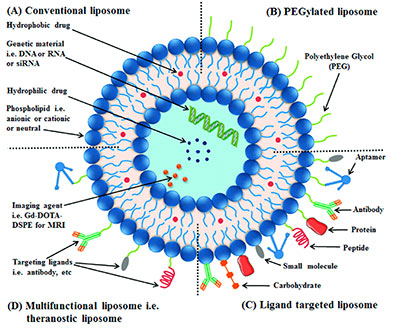Liposomes: Conventional liposomes are made of phospholipids